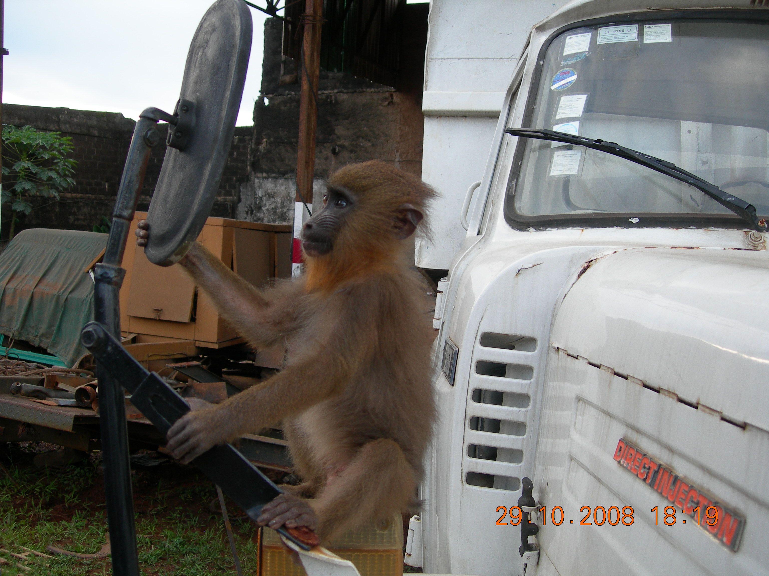 Afrique un grand a comme africacool page 6 for Je ris de me voir si belle en ce miroir